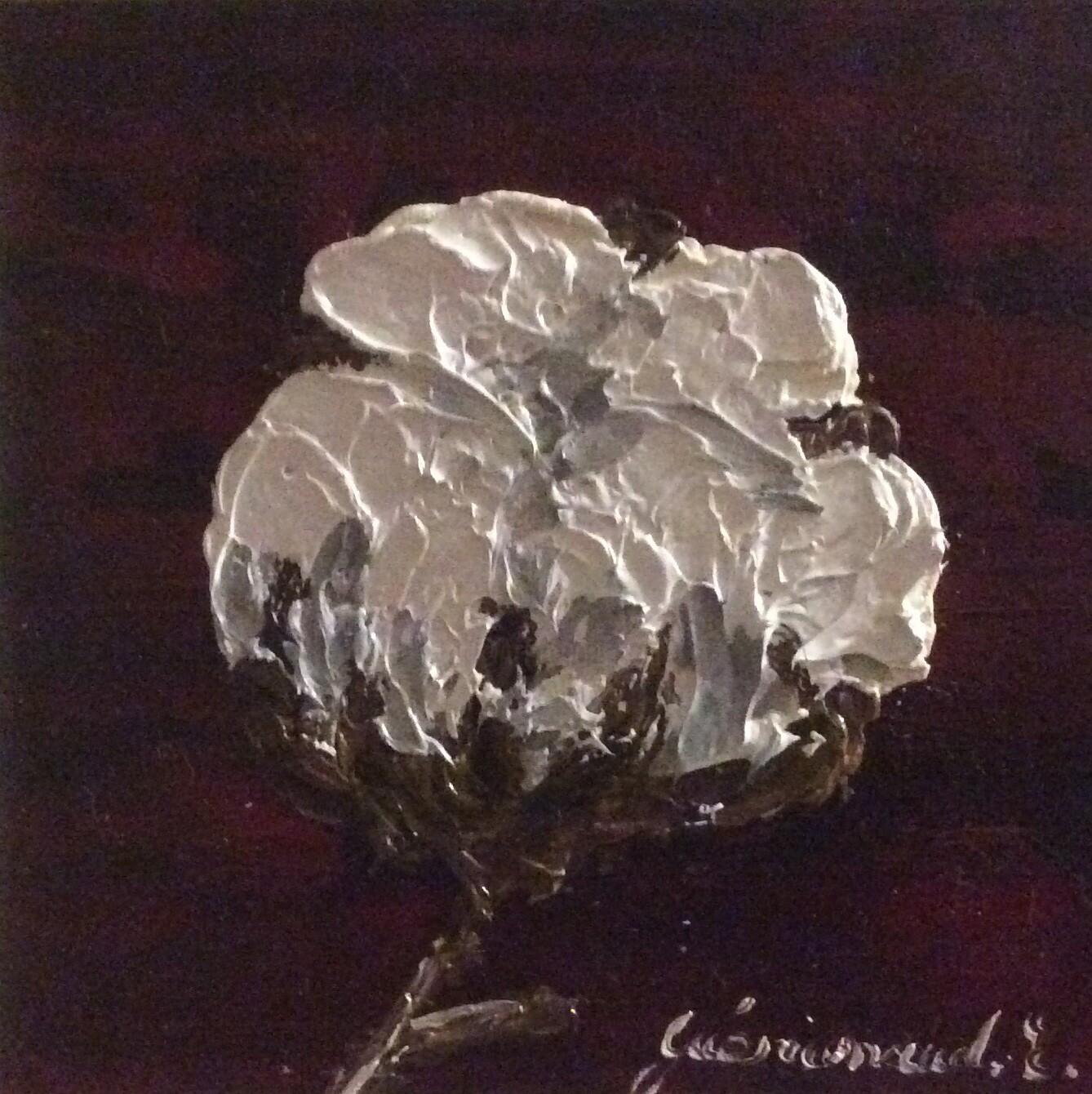 Etienne Guérinaud - Fleur de coton (6)